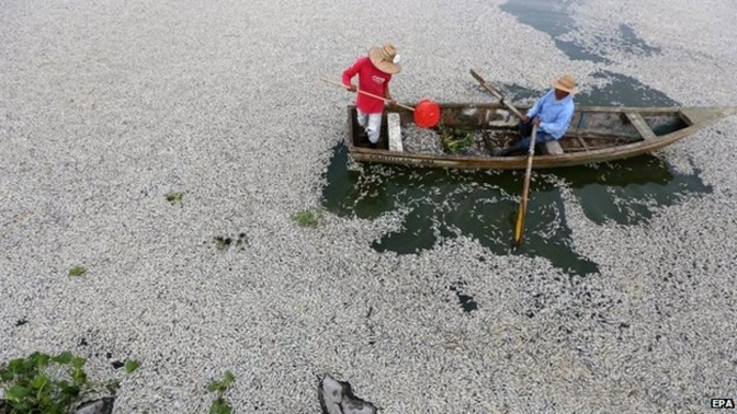 50 Tons Of Dead Fish Wash Up On Mexican Lake